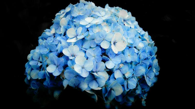 beautiful flowers royalty free stock image