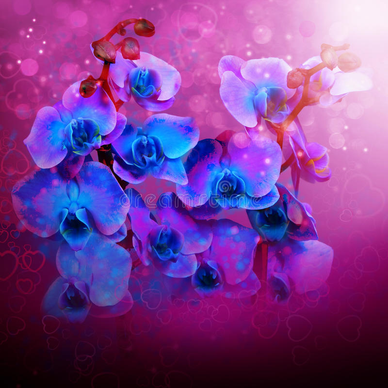 Beautiful flowers blue orchids royalty free stock photos