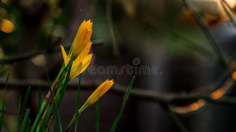 Beautiful flowers closeup shot stock image