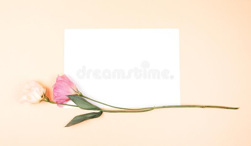 Beautiful flowers on a delicate pink texture, ribbon on a bouquet. eustoma. background for your holiday design royalty free stock image
