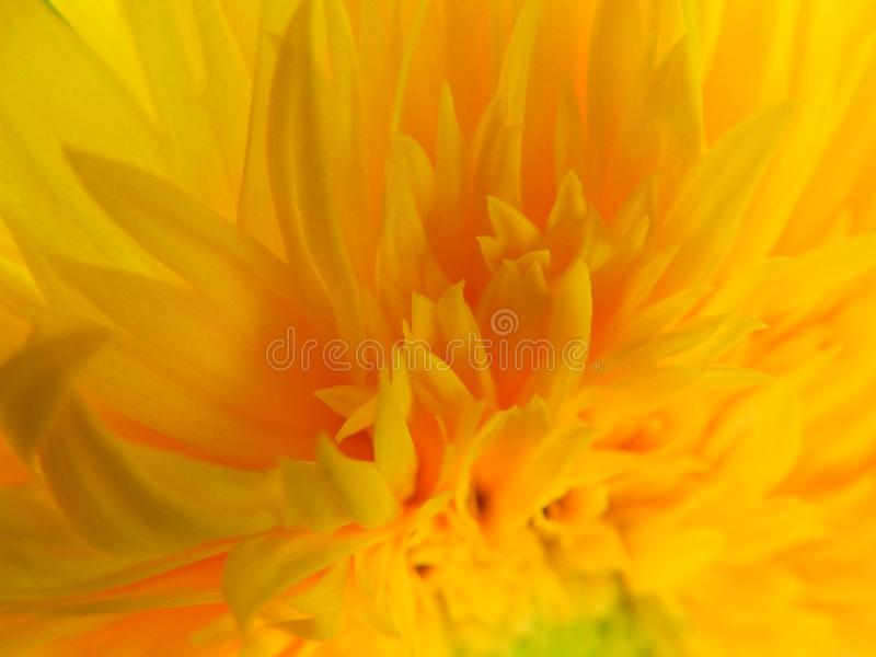 Flowers, nature, garden, field, outdoors, petals, beauty, beautiful, white, yellow. Beautiful flowers in the garden against the background of luscious greenery royalty free stock photography