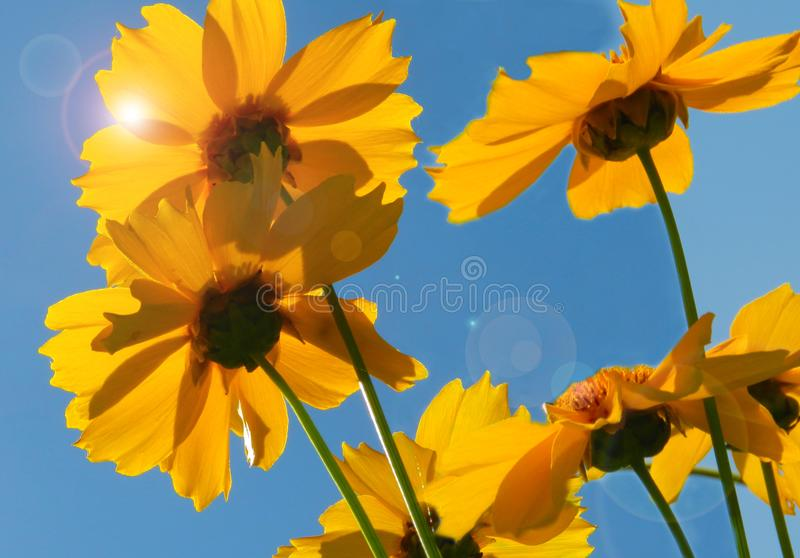 Flowers, nature, garden, field, outdoors, petals, beauty, beautiful, white, yellow. Beautiful flowers in the garden against the background of luscious greenery stock image