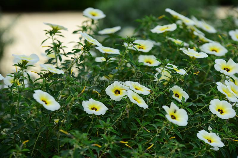 Beautiful flowers in the garden. stock photography