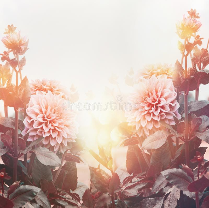 Beautiful flowers in garden or park in sunset light, floral background, summer outdoor stock photos