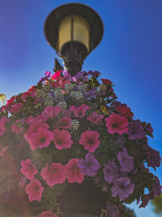 Beautiful flowers hanging from a street lamp stock images