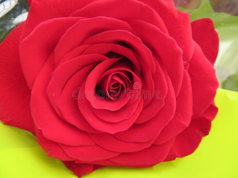 Beautiful flowers of intense colors and of great beauty royalty free stock images
