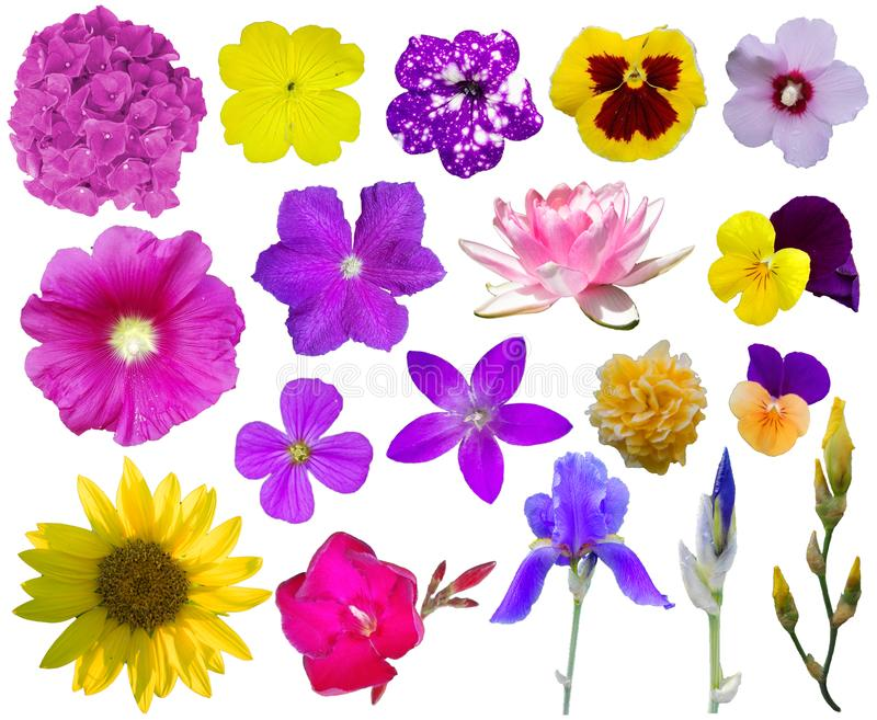 Flower collection 2. 18 beautiful flowers isolated on white background. PNG file with full transparency is available as additional format royalty free stock images