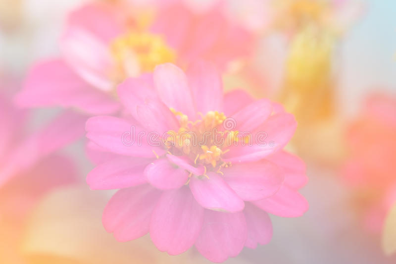 Beautiful flowers made with color filters royalty free stock photography