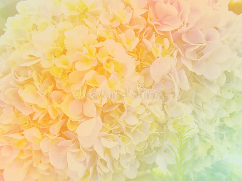 Beautiful flowers made with color filters. Beautiful flowers hydrangea made with color filters royalty free illustration