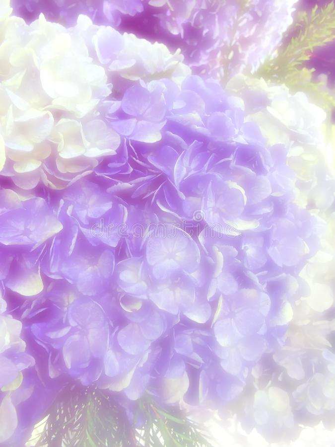 Beautiful flowers made with color filters. Beautiful flowers hydrangea made with color filters stock illustration