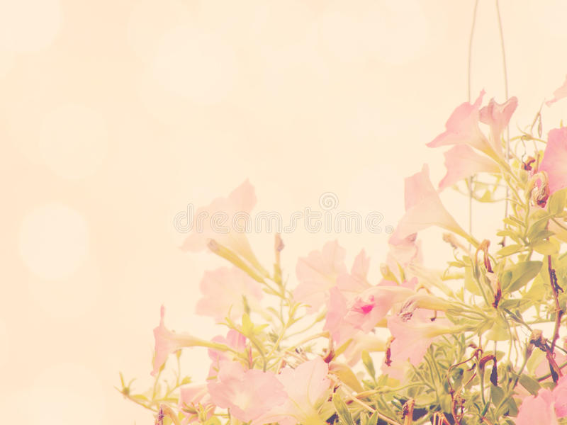 Beautiful flowers made with vintage color filters. Beautiful flowers made with color filters vector illustration