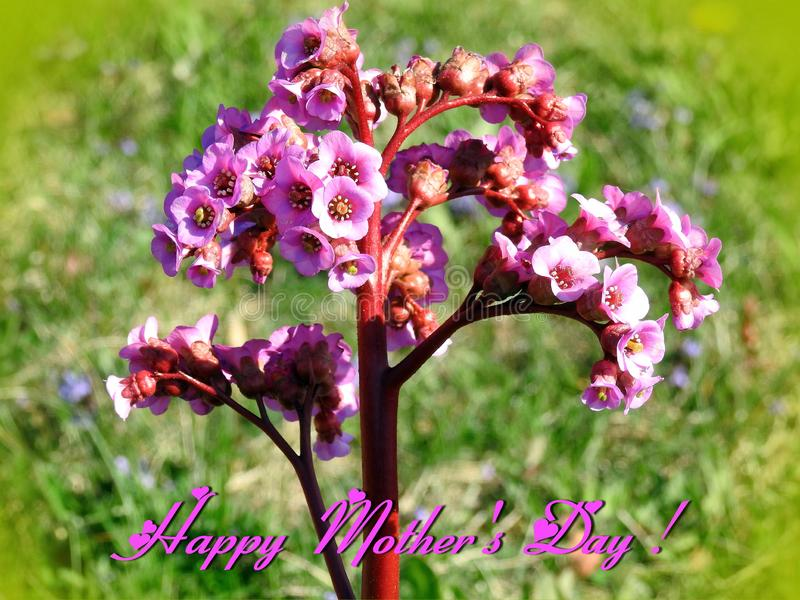 Beautiful flowers for Mothers Day, Lithuania stock image