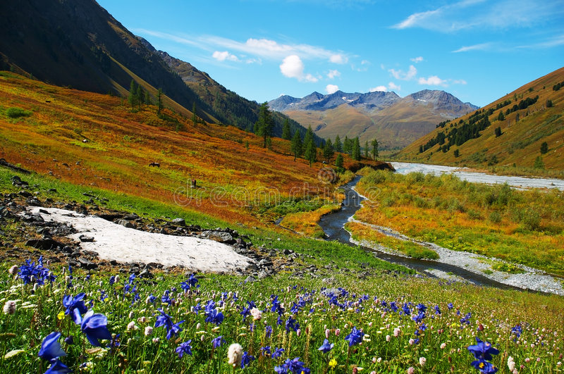 Beautiful flowers and mountains. royalty free stock photos