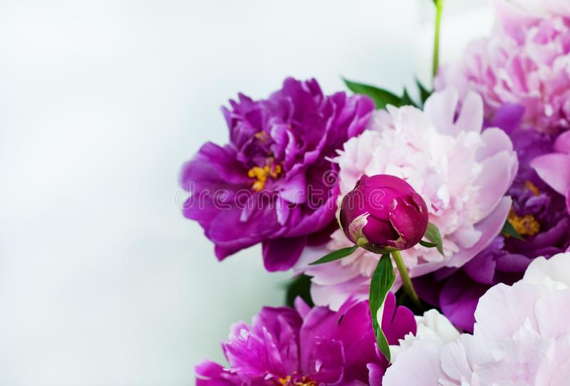 Beautiful flowers, peonies. Elegant bouquet of a lot of peonies of pink and red color close up stock photos