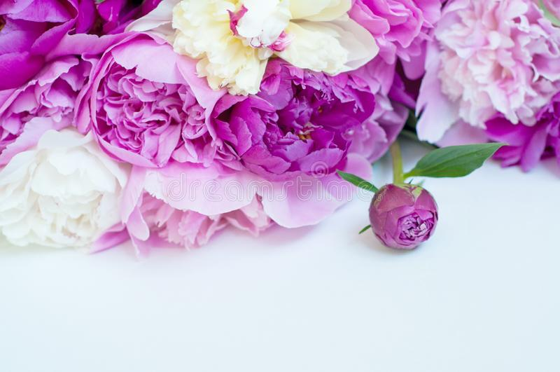Beautiful flowers, peonies on white background. Elegant bouquet of a lot of peonies of pink color close up royalty free stock images