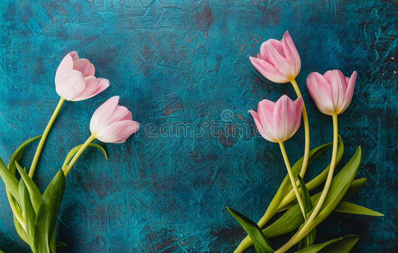 Pink tulips flowers. Beautiful flowers pink tulips on dark blue background. Top view. Place for text royalty free stock image