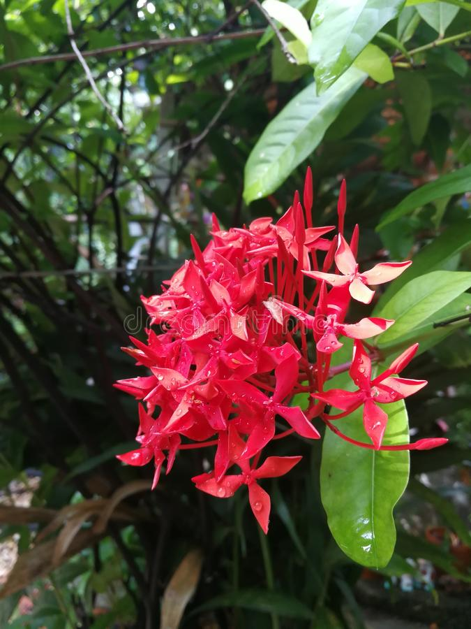 Beautiful red flowers royalty free stock images