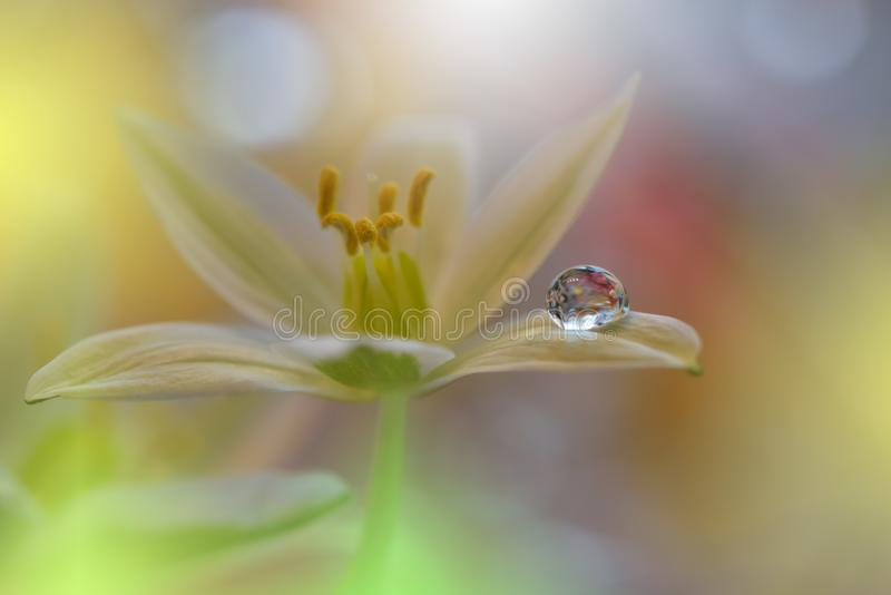 Beautiful flowers reflected in the water,artistic concept.Tranquil abstract closeup art photography.Floral fantasy design. Abstract macro photo with Flowers and stock image