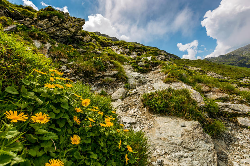 Beautiful flowers on Steep slope of rocky hillside royalty free stock photo