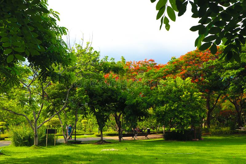 Beautiful flowers and tree forest landscaped in the public garden in the summer stock images