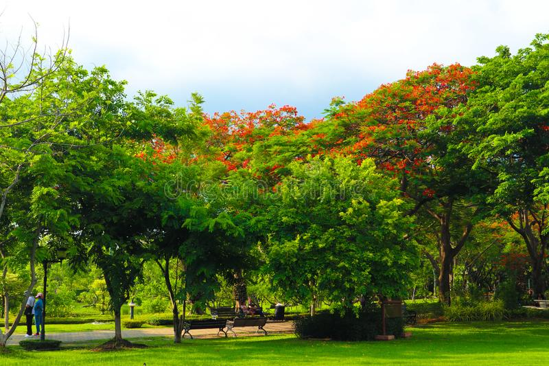 Beautiful flowers and tree forest landscaped in the public garden in the summer stock photos