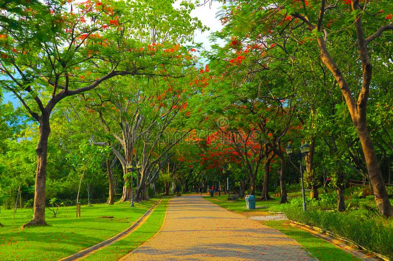Beautiful flowers and tree forest landscaped in the public garden in the summer stock photography