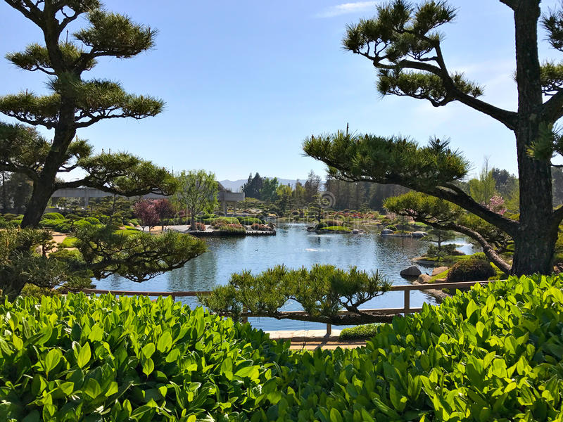 Beautiful flowers and trees in Japanese Garden royalty free stock photos