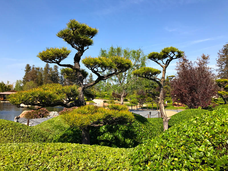 Beautiful flowers and trees in Japanese Garden royalty free stock image