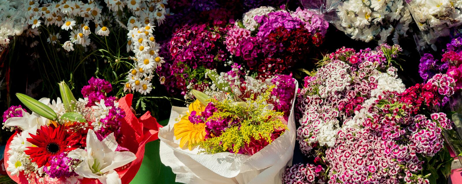 Beautiful flowers of various types royalty free stock image