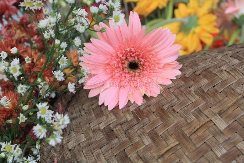 Beautiful flowers on wood background stock images