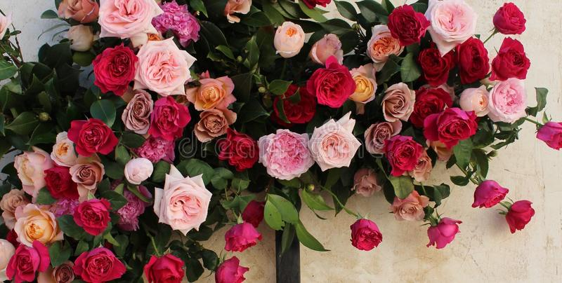 Beautiful Flowers your Loved Ones in Beverly Hills. Welcome to flower delivery Beverly hills. Everyone gives the beautiful flowers like the birthday gift, an royalty free stock image