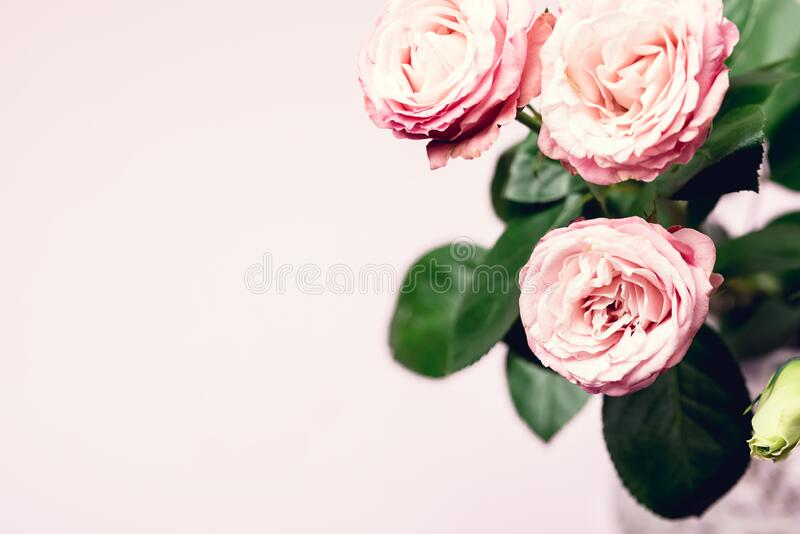 Beautiful Flowers in a Vase Spring Background White and Pink Flowers on Pink Background Copy Space Horizontal Pink Roses and. Beautiful Flowersin a Vase Spring royalty free stock image