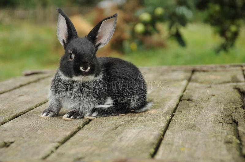 Beautiful fluffy little bunny stock images