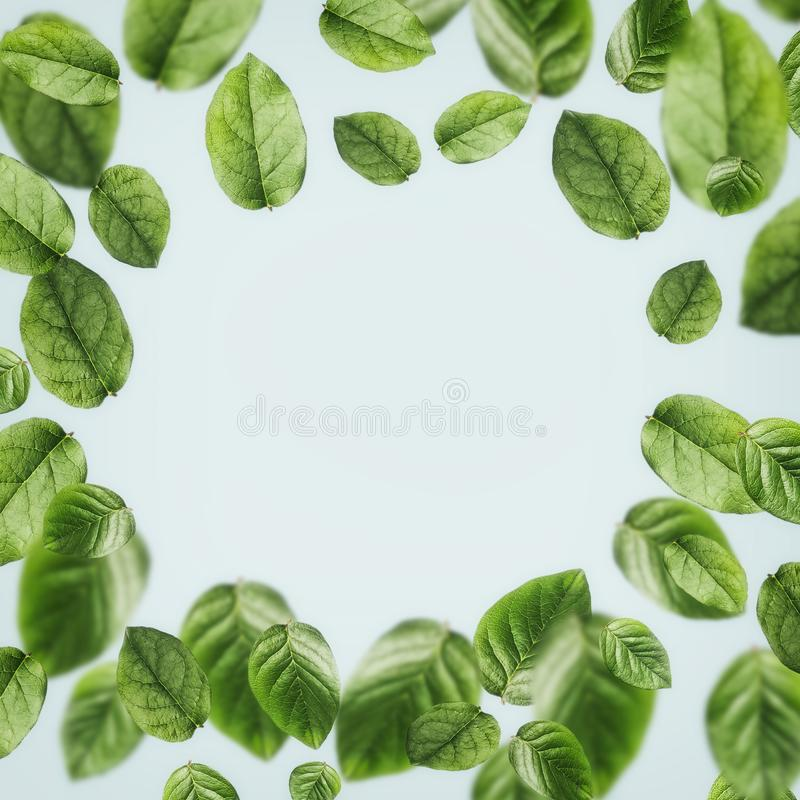 Beautiful flying green leaves background , frame . Creative layout stock image