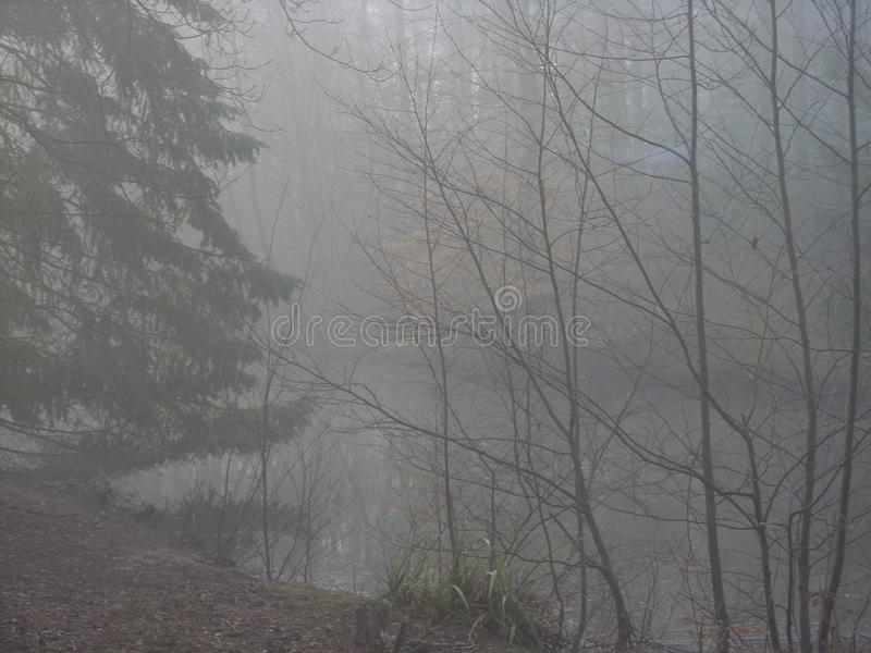 Foggy forest overlooking forest lake stock photography