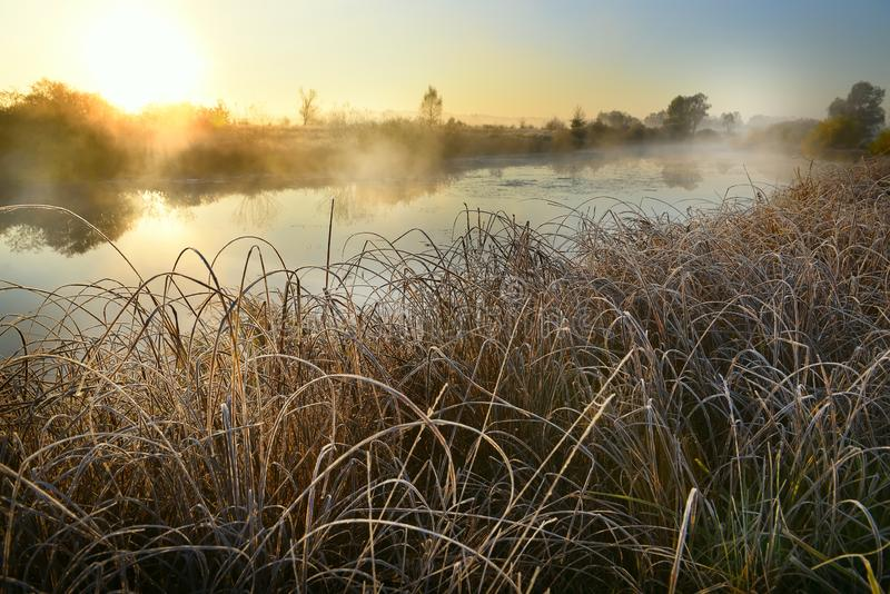 Beautiful foggy frosty sunrise on the river. The first frost on the grass and flowers in the fog on the shore with a view of the s royalty free stock photography