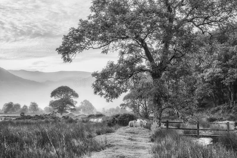 Black And White Misty : Beautiful foggy misty black and white landscape autumn