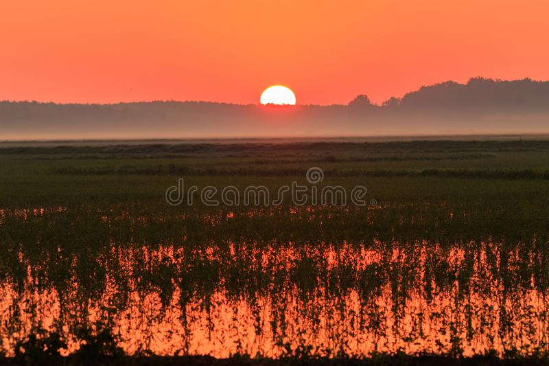 The Glow. A beautiful foggy morning sunsrise over the waters of Bald Knob Wildlife Refuge in Bald Knob, Arkansas 2017 stock photos