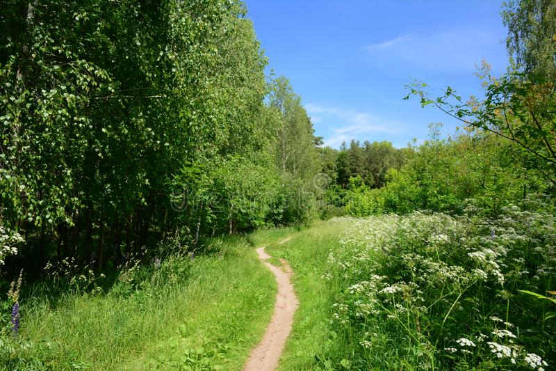 Beautiful footpath in the summer forest. Beautiful footpath in the summer blooming forest stock photos