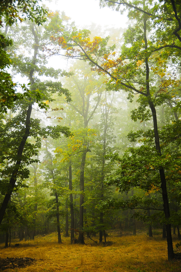 Free Beautiful Forest Stock Image - 7021141