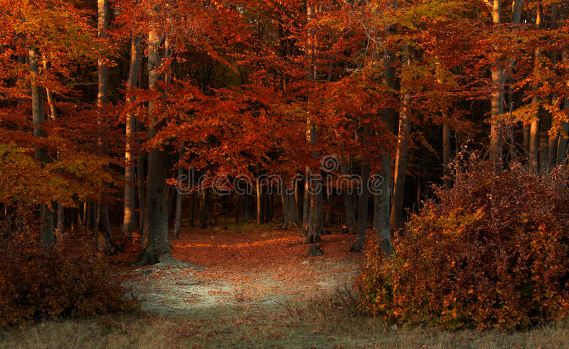 Beautiful forest during autumn stock photography