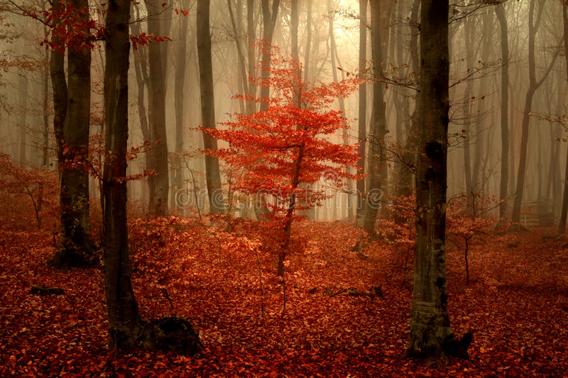 Beautiful forest during autumn royalty free stock photography