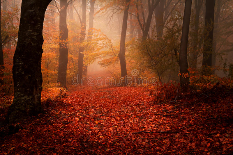 Beautiful forest during autumn stock images