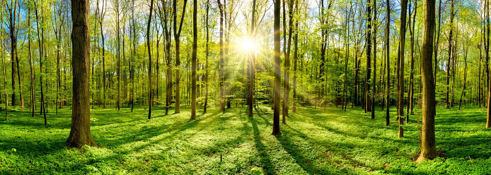 Beautiful forest with bright sun. Beautiful forest in spring with bright sun shining through the trees royalty free stock photography