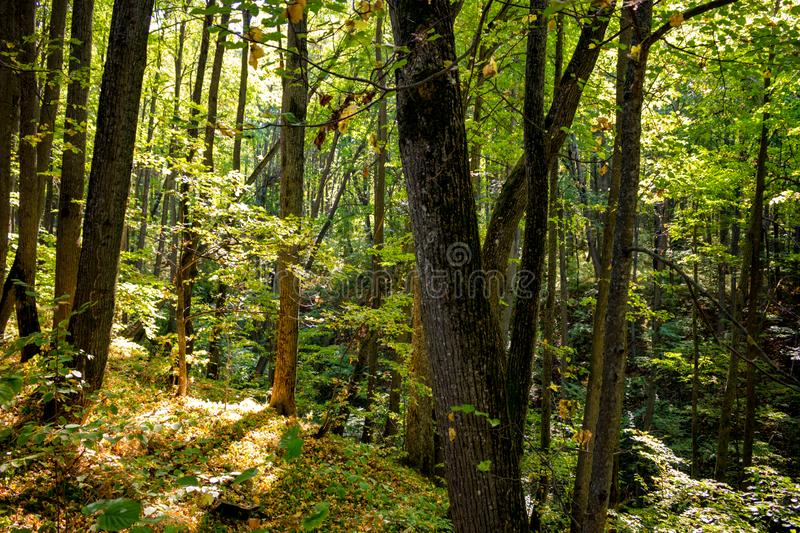 Beautiful forest in early autumn stock photo