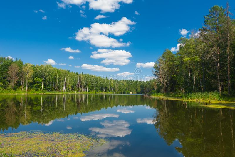 Beautiful forest lake and blue sky at sunny day. royalty free stock photography