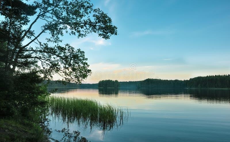 Beautiful forest lake in twilight. Overgrown lake shore. Dark evening landscape. Sunset sky stock photography