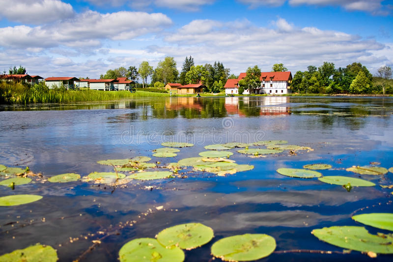 Beautiful forest lake with water lilies on surface stock image