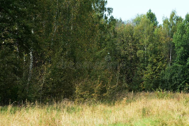 Beautiful forest landscape in early autumn stock photography