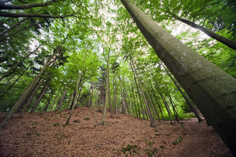 The beautiful forest landscape in summer. stock images